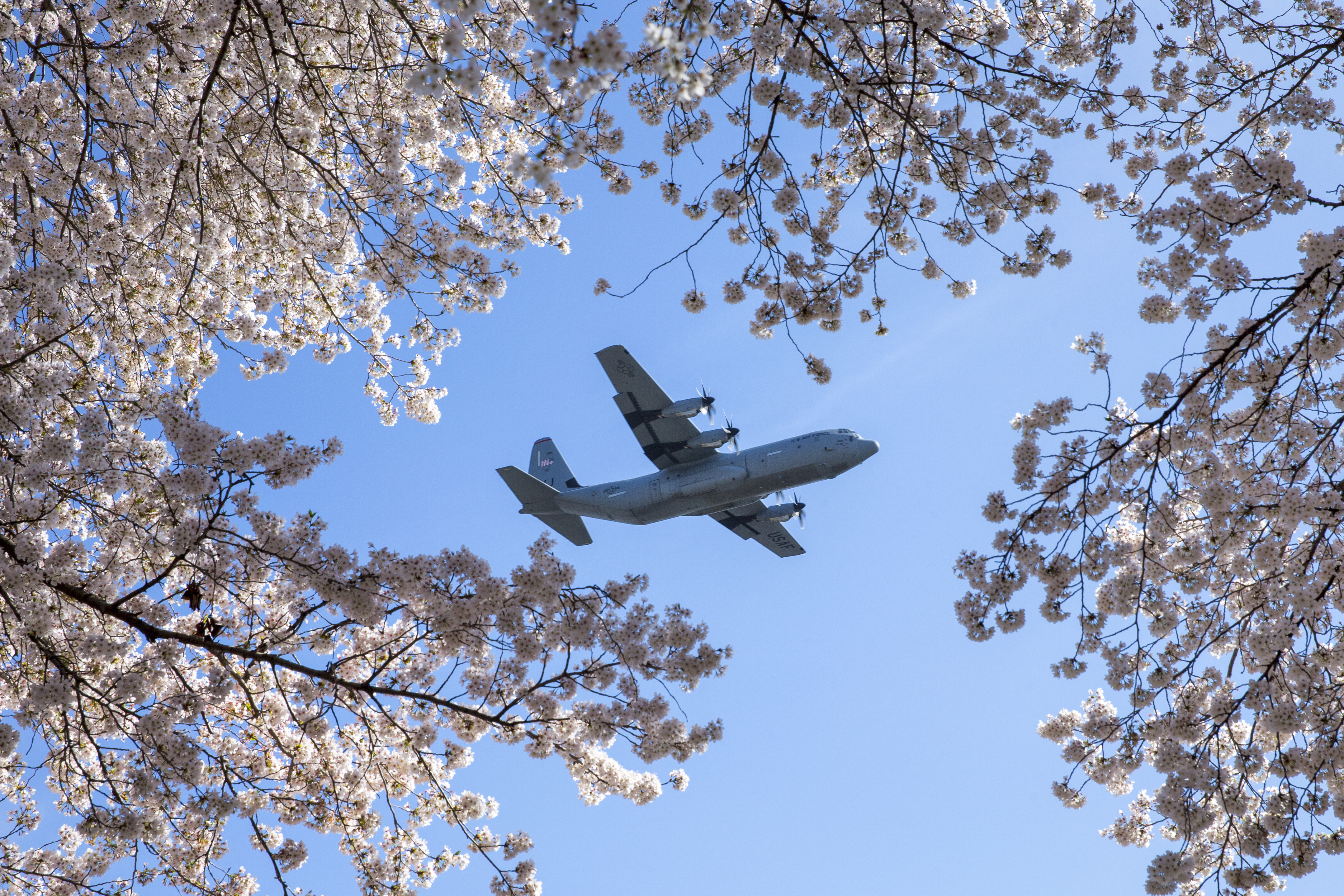 An Air Force C-130J Super Hercules assigned to the 36th Airlift Squadron flies over Yokota Air Base, Japan, during a training mission, March 30, 2018. Sakura trees bloomed at Yokota eight days earlier that last year. (Yasuo Osakabe/Air Force)