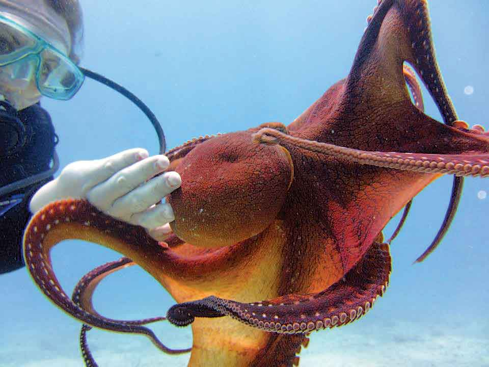 Army, Cornell researchers study octopus skin to use in camouflage