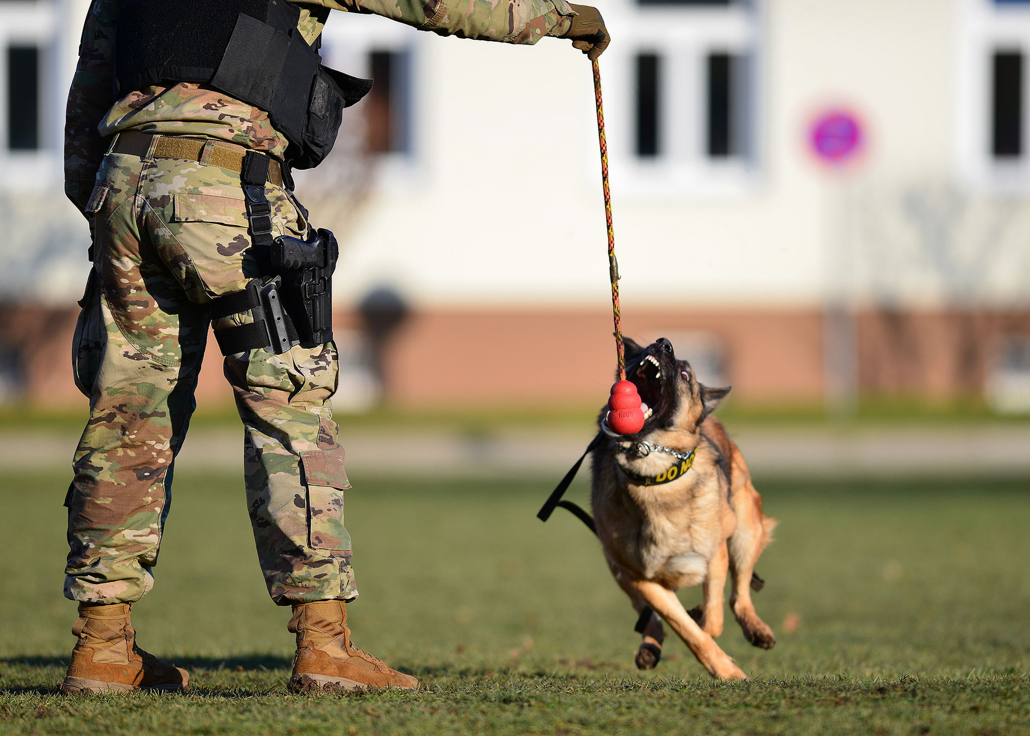 Pfc. Jermaine Lewis conducts basic obedience drills with Astor Y483, a military working dog, at Panzer Kaserne, Stuttgart, Germany, Feb. 4, 2019. (Visual Information Specialist Rey Ramon/Army)