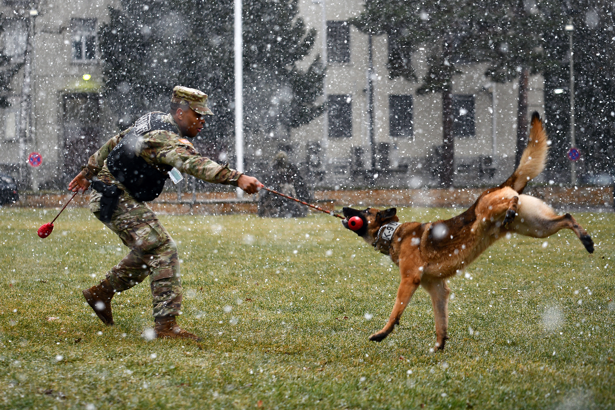 Army Spc. Jermaine Lewis and Astor, a military working dog, conduct off-leash obedience drills Jan. 28, 2020, on Panzer Kaserne, Boeblingen, Germany, Jan. 28, 2020. (Jason Johnston/Army)