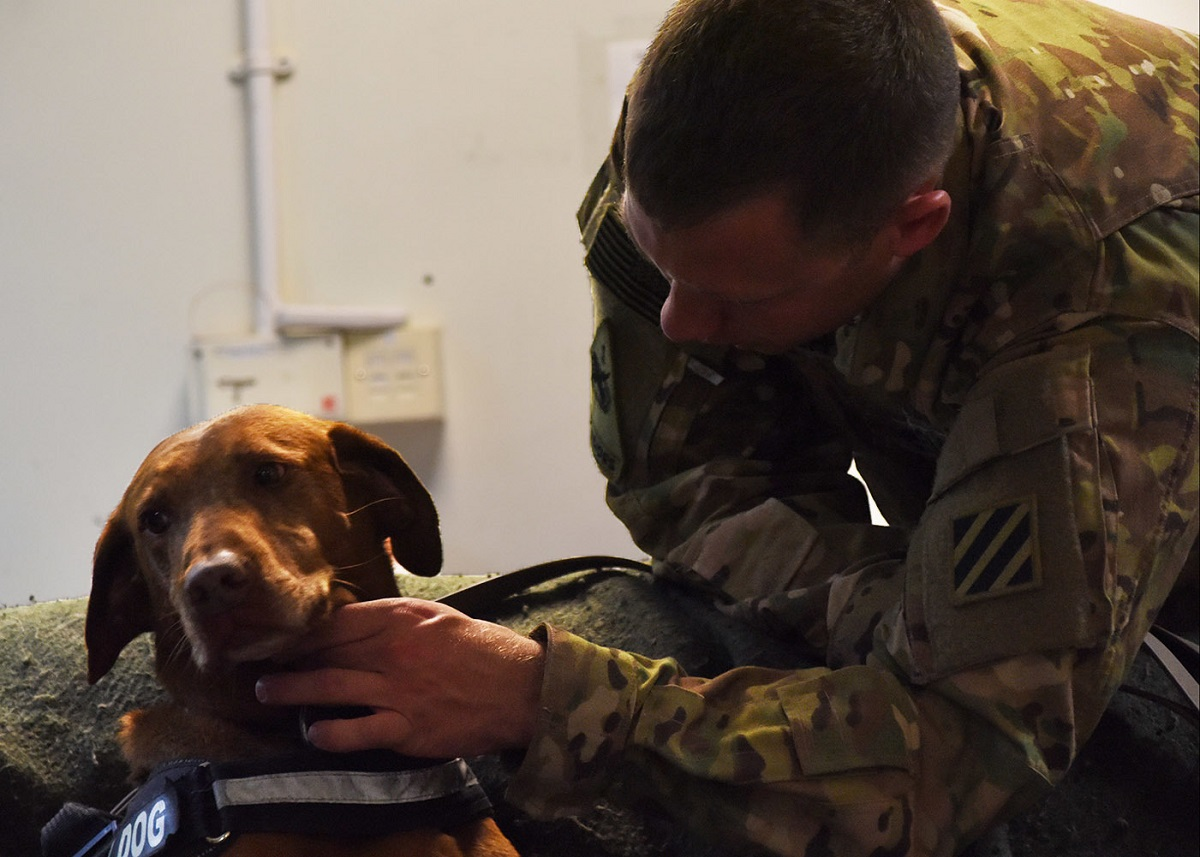 VA promises full review of all medical testing on dogs, with a goal of ending the practice
