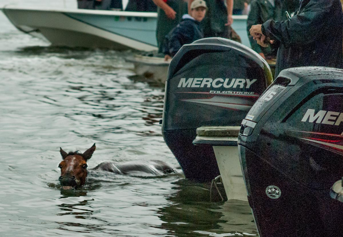 Chincoteague, Va. (July 25, 2018) A lost pony weaves in and out of the crowd of spectator boats, off course during the swim. Coast Guardsmen from Station Chincoteage used their boat to guide the pony to shore. (photo by Mark D. Faram/Navy Times)