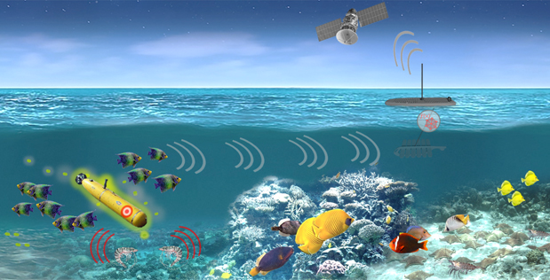 From shellfish to plankton, DARPA program turns creatures into sensors
