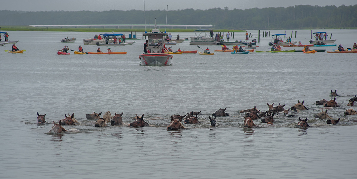 Chincoteague, Va. (July 25, 2018) Coast Guardsmen stand between boaters and kayakers as the ponies swim between Assateague and Chincoteague Islands during the annual pony swim. (photo by Joan Zopf-Faram/special)