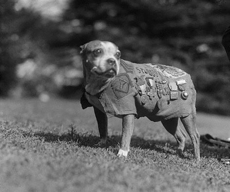 Stubby's story: All about the iconic World War I 'war dog' ... and star of an upcoming animated film