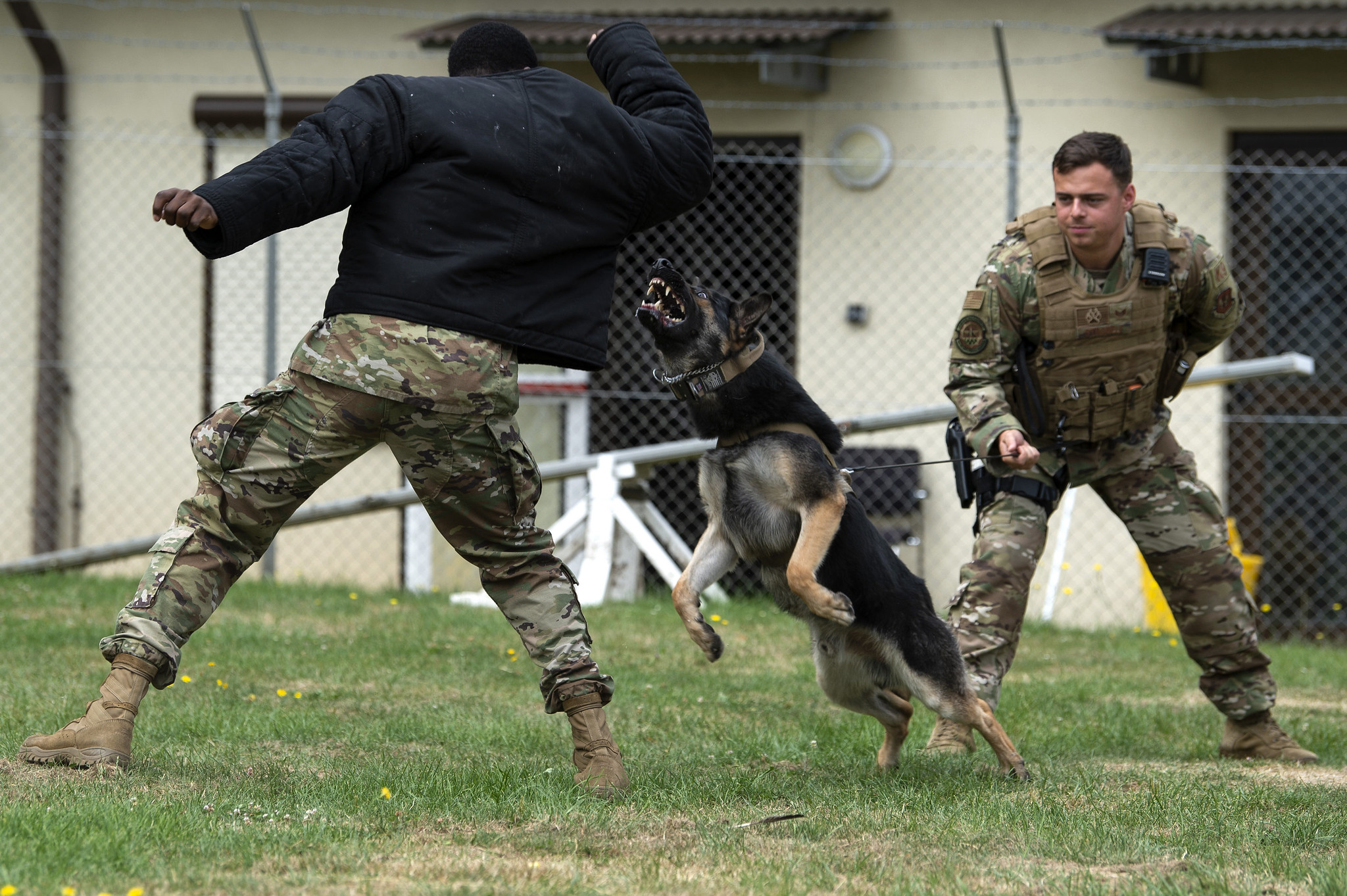 Air Force Senior Airman Victor Henderson, left, and Staff Sgt. Kyle Strobele, right, conduct training with Mike, a military working dog, at Spangdahlem Air Base, Germany, Aug. 1, 2019. (Airman 1st Class Valerie Seelye/Air Force)
