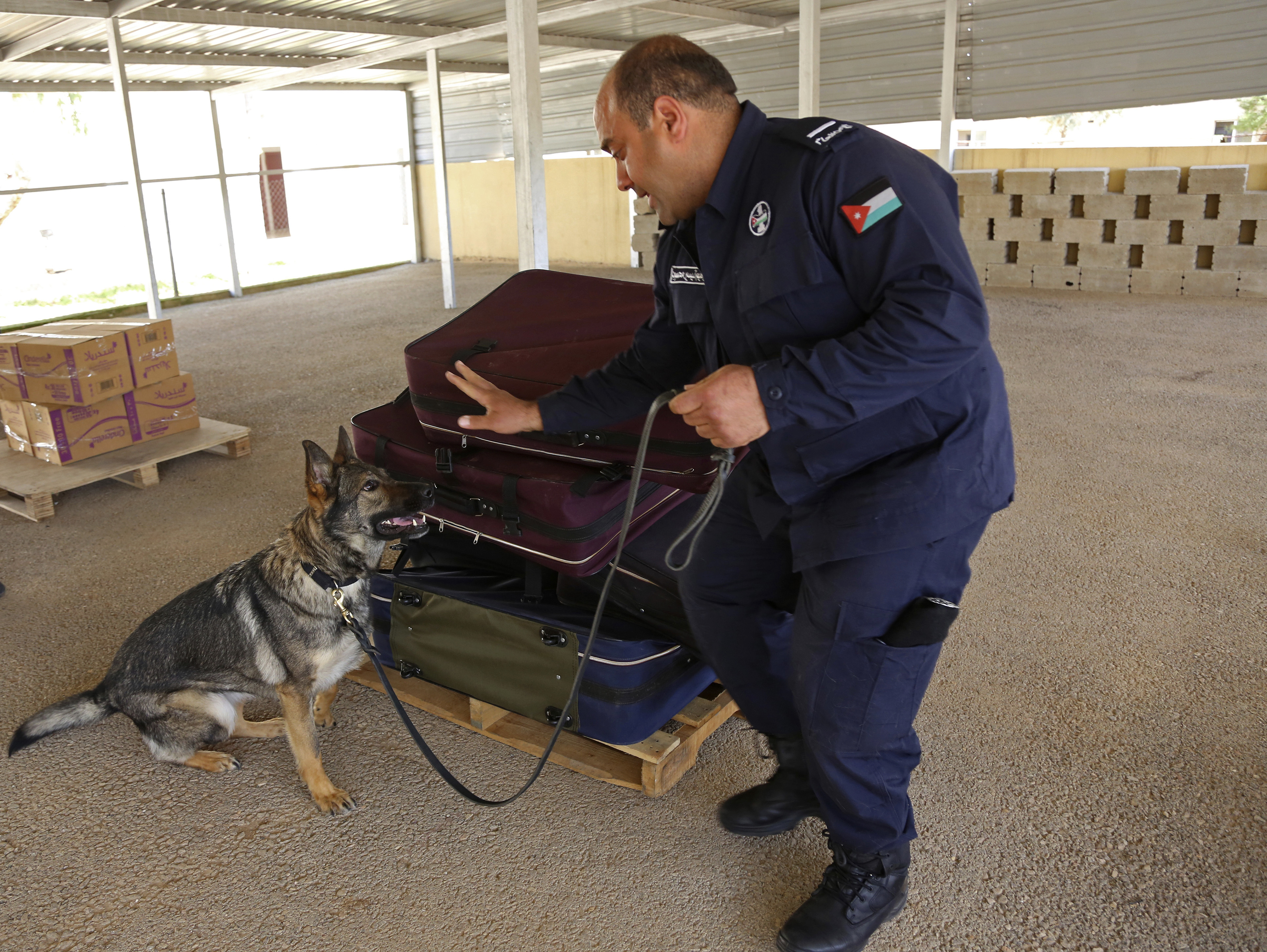 A handler from the K-9 unit of Jordan's police directs an explosives-sniffing German shepherd during a drill in which C4 plastic explosives were hidden in a suitcase meant to simulate airport luggage checks, in Amman Jordan, on March 19, 2018. (Raad Adayleh/AP)