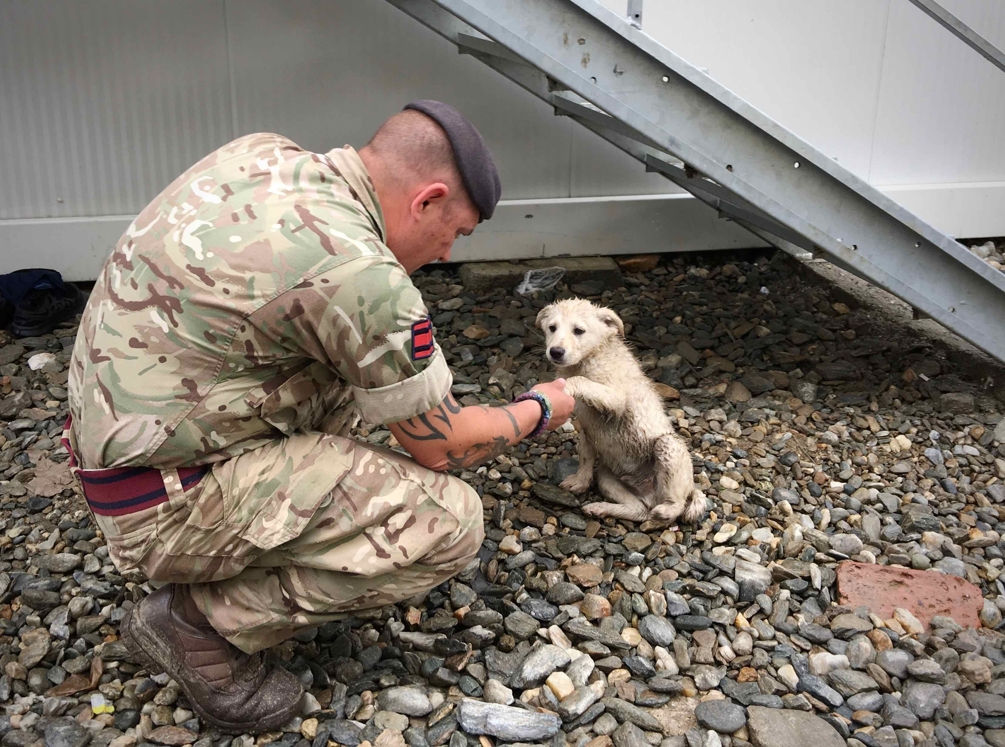 A member of Britain's Armed Forces takes a break to pet a local puppy while checking out the construction site. The Joint National Training Center in Cincu, Romania, is located among many farms, so members of the military have the opportunity to work near animals from those farms. (Jen Judson/Staff)