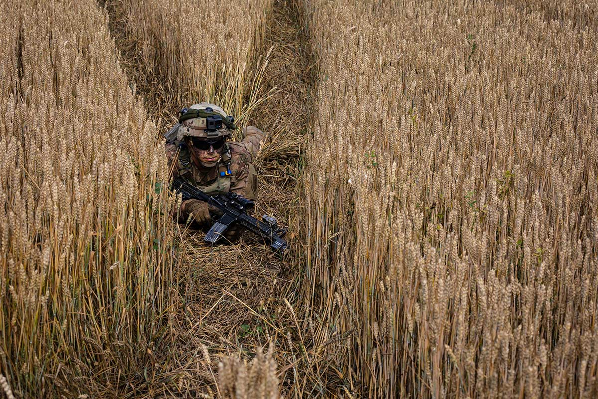 An infantryman conceals himself in a wheatfield during an air assault mission at Bordusani, Romania, at Saber Guardian 19, June 20, 2019. (Sgt. Thomas Mort/Army)