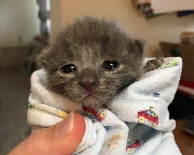 'Cat Team 7' rescues Norfolk Naval Station's feral felines