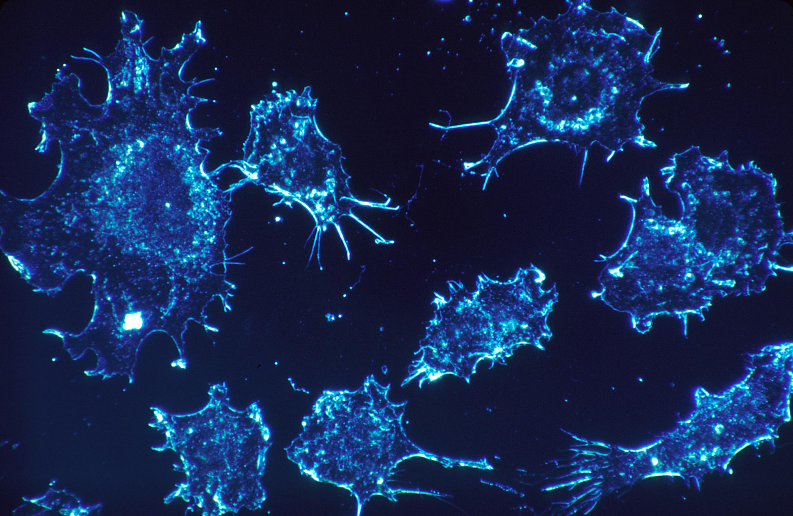 VA plans massive expansion of cancer treatment options