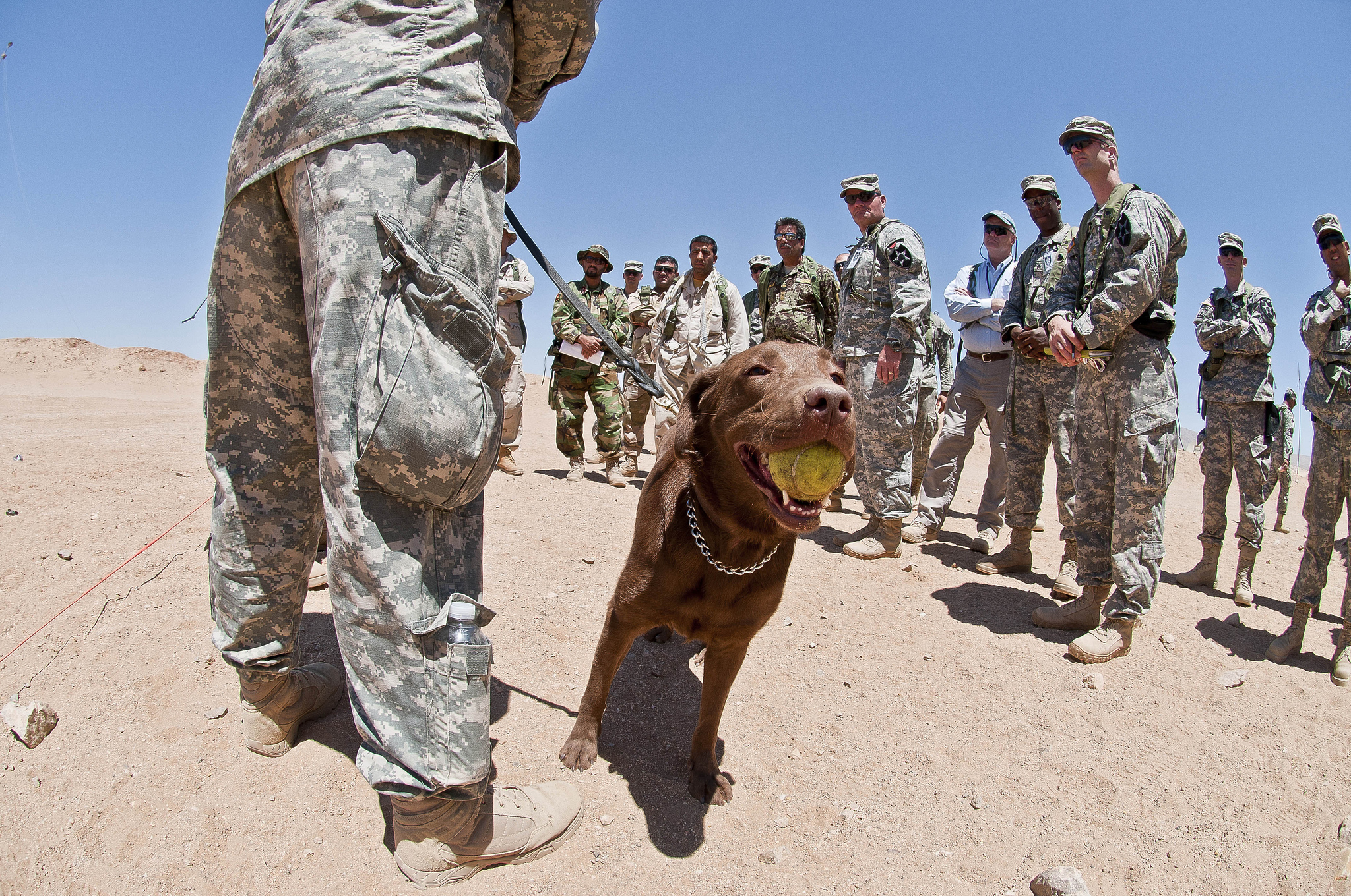 Army mishandled bomb-sniffing dogs from Afghanistan, report says