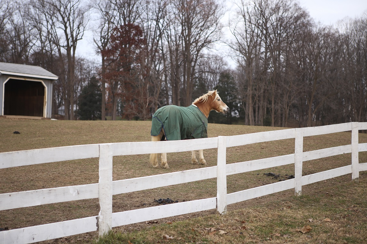 Lizzy stands watch over the pastures as the end of a long weekend. Saturdays and Sundays are the busiest days at the stable, jam-packed full of riders all day. Winter may be here, but the horses at NVTRP ride outdoors year-round. (Andrea Scott/Staff)